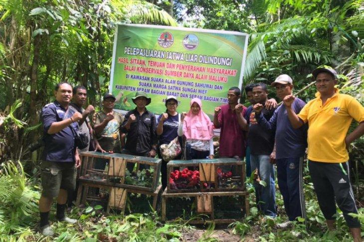 BKSDA lepaskan ratusan satwa liar endemik Maluku
