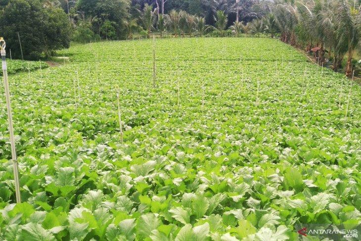 DPMPD Kaltim ajak kades gandeng usaha desa kembangkan pertanian
