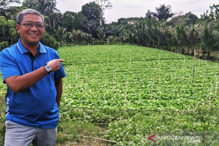 DPMPD Kaltim ajak kades gandeng BUMDes majukan pertanian
