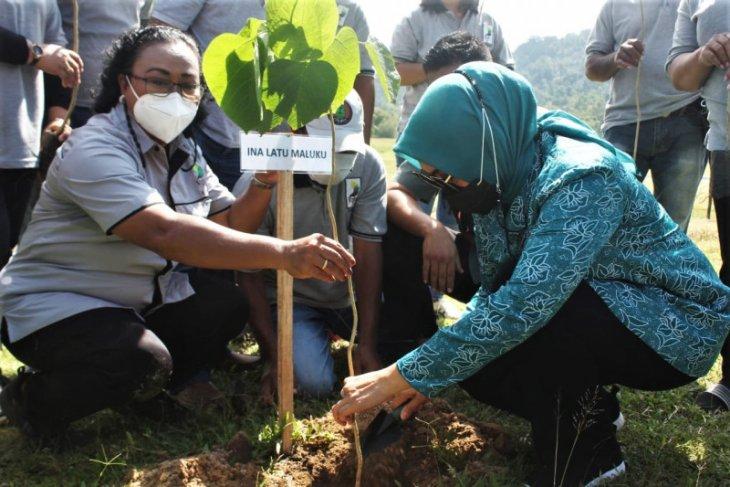Tim Penggerak PKK Maluku - KPH Ambon tanam 150 pohon di Desa Suli