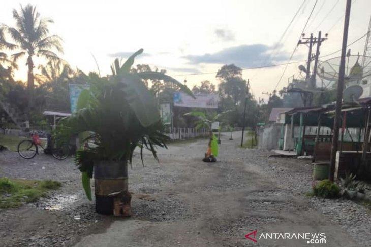 Kecewa tidak diaspal, warga Nagan Raya tanam pisang di badan jalan