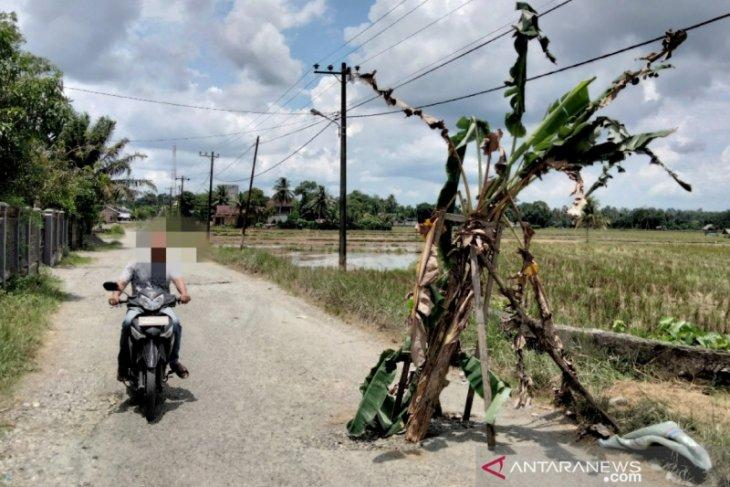 Badan jalan di Nagan Raya ditanami pohon pisang ternyata capai satu kilometer