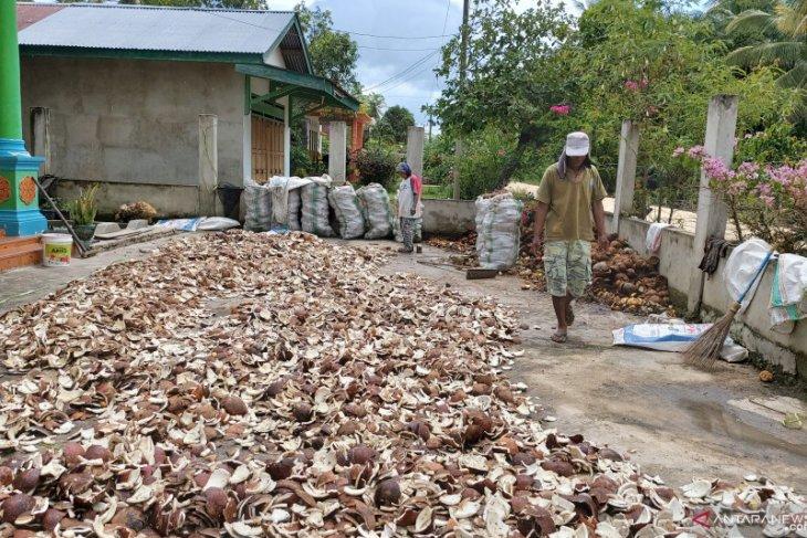 Petani kelapa sambut gembira kenaikkan harga kopra Rp11.000/kg