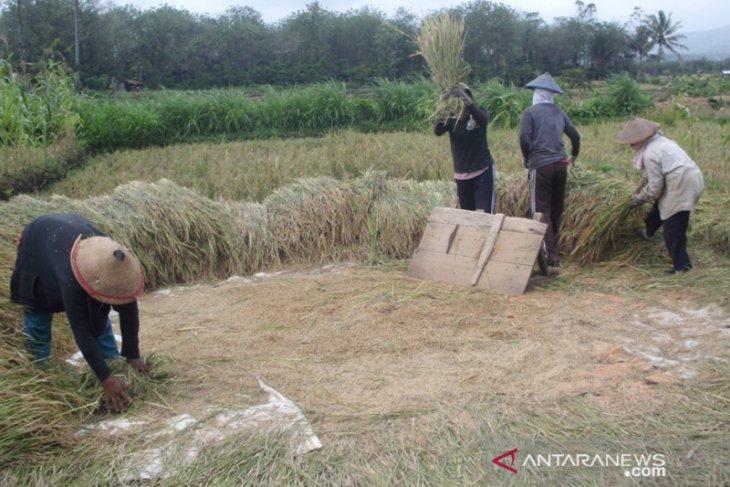 Petani Rejang Lebong diminta bentuk kelompok untuk akses bantuan