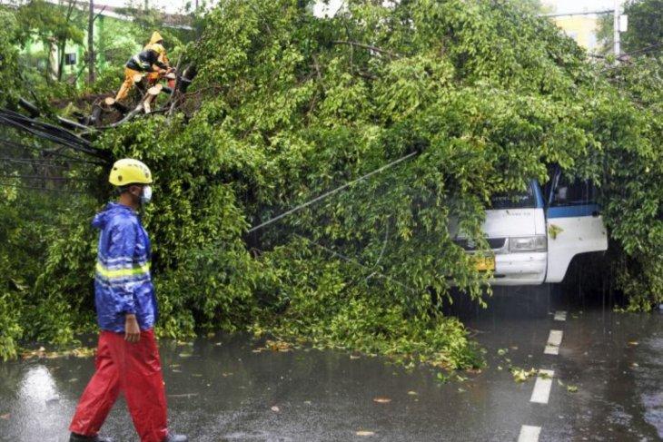 Pohon tumbang akibat angin kencang dan hujan deras