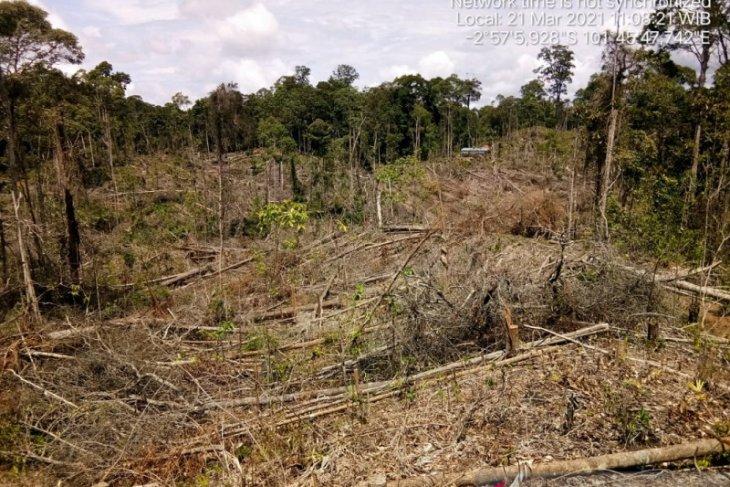 Sebagian hutan Mukomuko rusak akibat perambahan