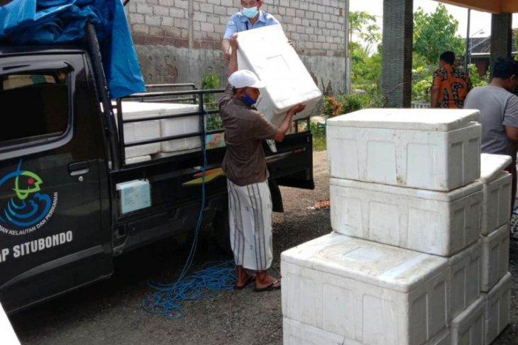 KKP serahkan bantuan 2,3 juta benur udang ke petambak di Tuban