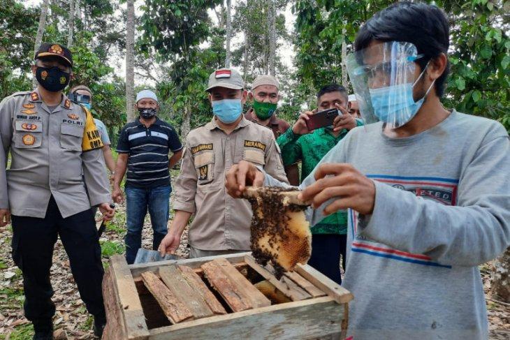 Pekerja PETI di Merangin beralih ke budidaya lebah madu