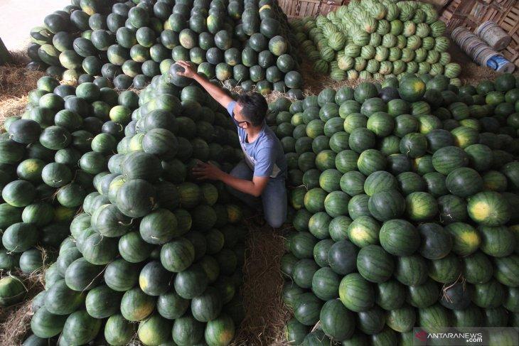 Penjualan Buah Semangka Meningkat