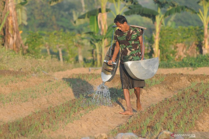 Biaya Ekstra Petani Bawang Merah