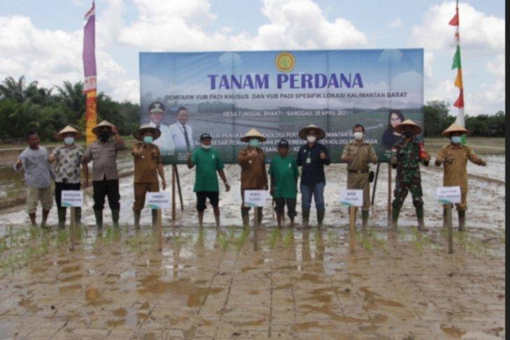 Wabup Sanggau tanam perdana varietas unggul di Tunggal Bakti