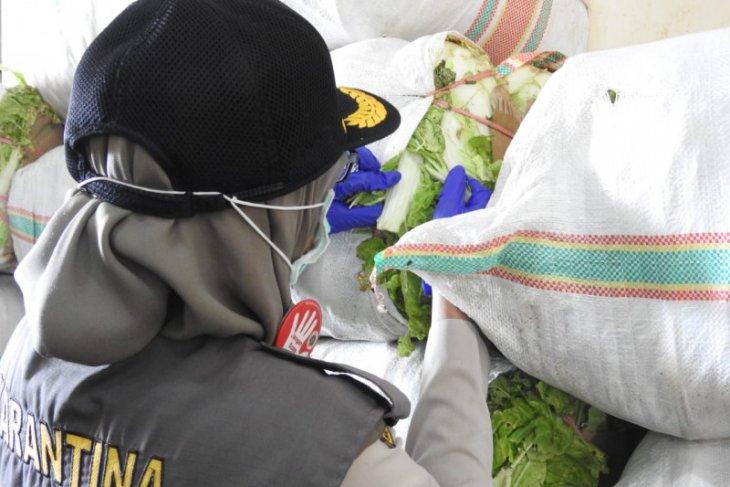 Balai Karantina Pasokan sayur ke Maluku Utara di Ramadan meningkat