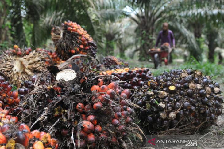Indonesia-Belanda memperluas kerja sama sawit berkelanjutan