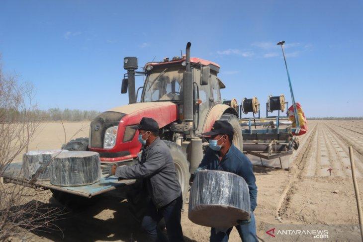 Petani kapas Xinjiang minim menggunakan tenaga manusia