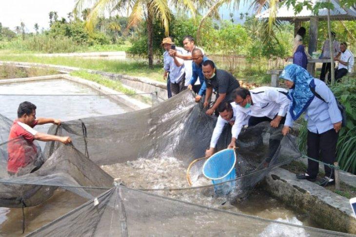 KKP jadikan Pasaman sentra ikan mas unggul di Sumatera