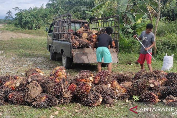 UU Ciptaker beri perlindungan pekerja sektor sawit