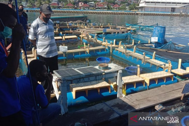Kadis KP Perikanan budi daya topang Maluku sebagai LIN