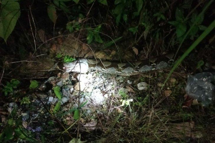 Telan seekor kambing, ular piton ditangkap warga