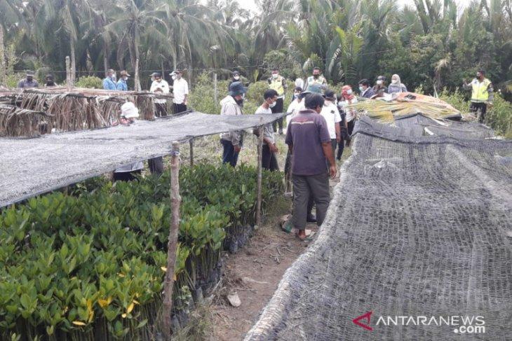 BRGM reboisasi 6.000 hektare hutan bakau di Kalimantan Barat