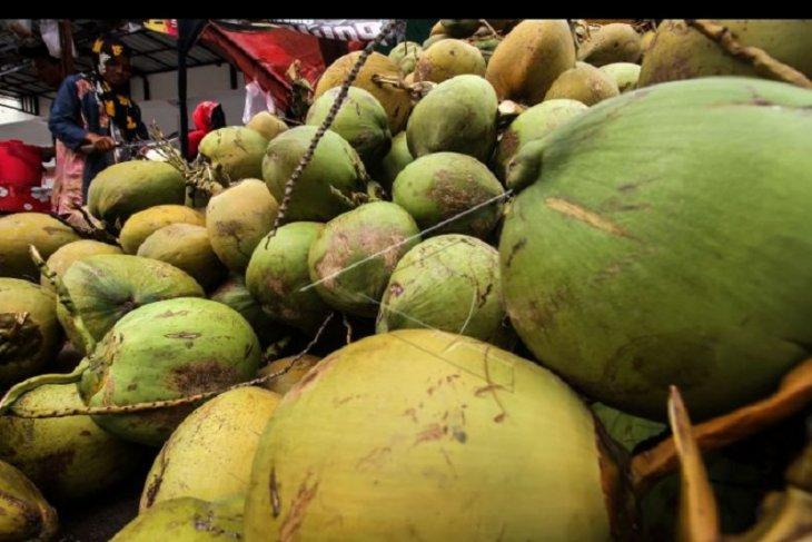 Pedagang kelapa muda meraup keuntungan selama PPKM darurat