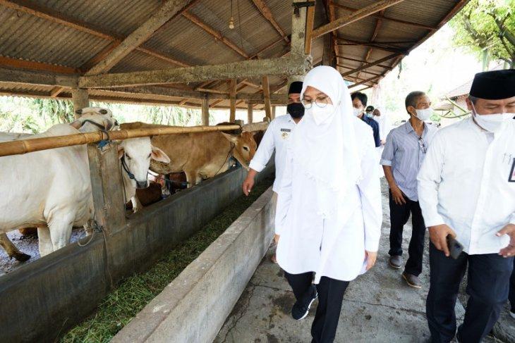 Banyuwangi dipilih jadi percontohan pengembangan sapi belgian blue dan wagyu