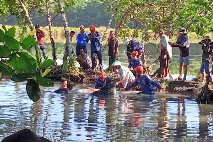 Dua hari berenang di empang warga, akhirnya seekor lumba-lumba diantarkan ke laut