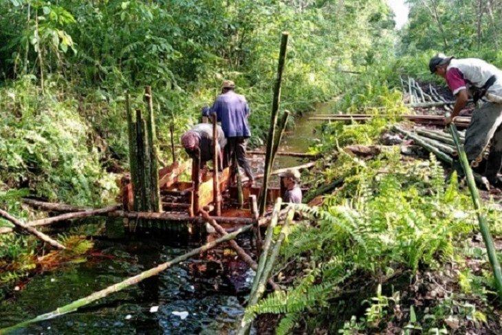 Badan Restorasi Gambut bangun puluhhan unit infrastruktur pembasahan lahan gambut