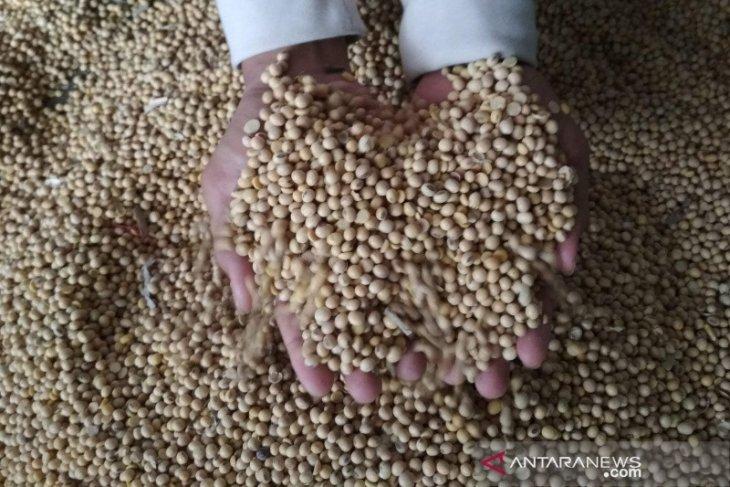Harga kedelai impor di Kudus tembus hingga Rp10.000/kg