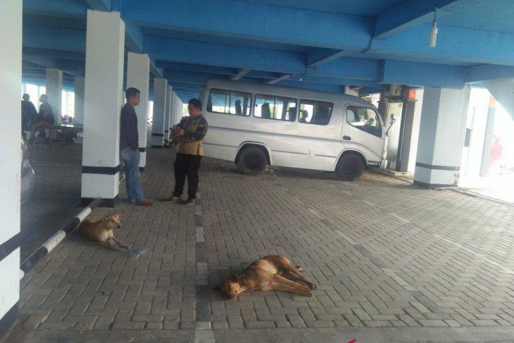 Kasus gigitan hewan rabies di Mukomuko turun
