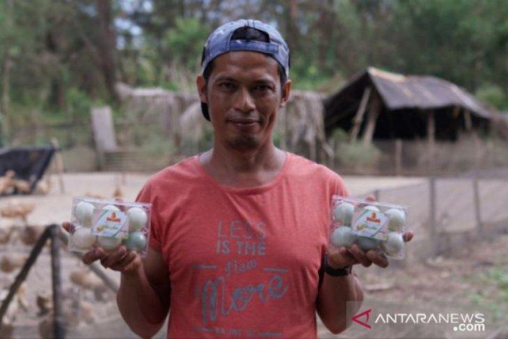 Jadi mitra binaan PT Timah, Etrawadi kembangkan usaha peternakan bebek