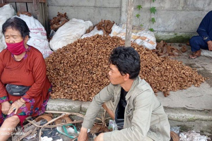 Kencur dongkrak pendapatan masyarakat suku Badui