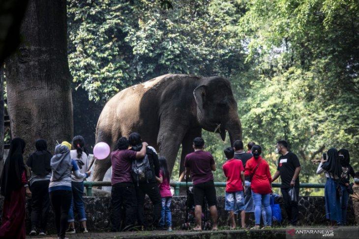 On Eid holiday, Ragunan Zoo receives 2,460 visitors