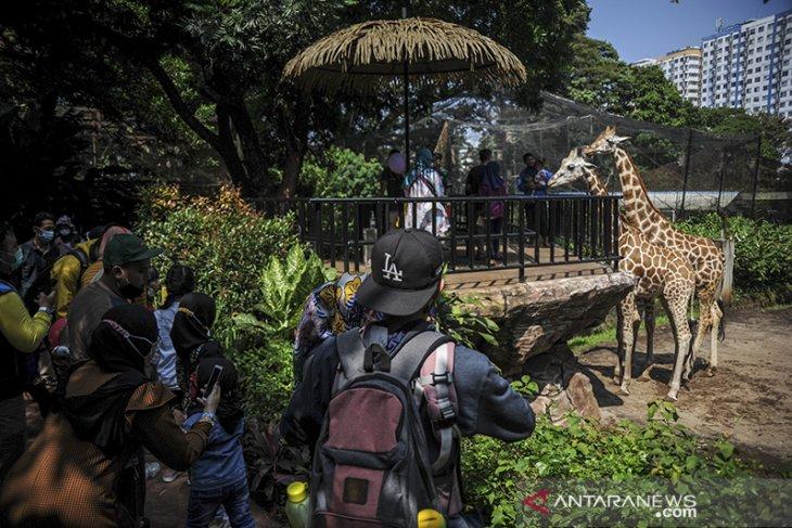 Wisata di Bandung Zoological Garden
