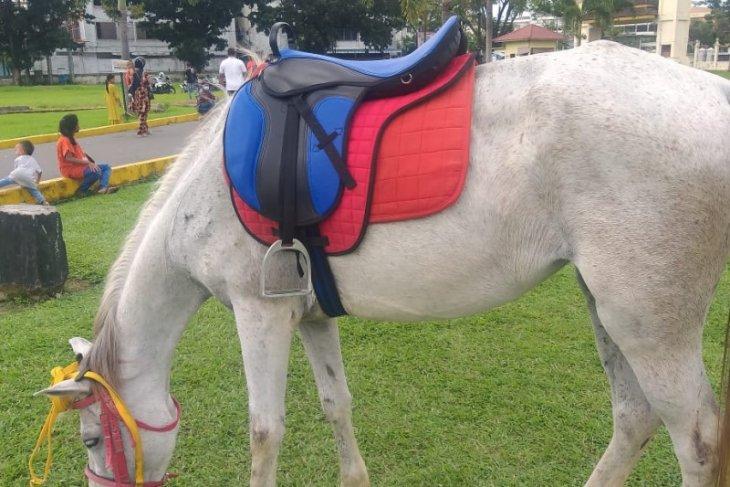 Kuda sewa di Istana Maimun dari Aceh