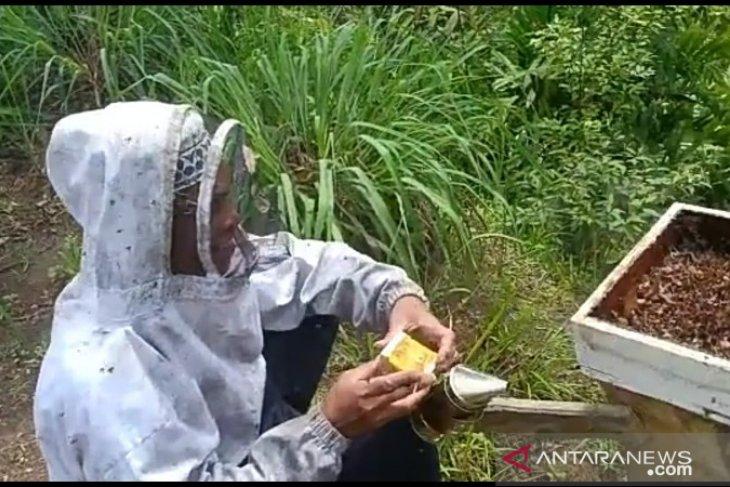 Lebah madu hasil budidaya petani Tapsel butuh pendampingan produksi