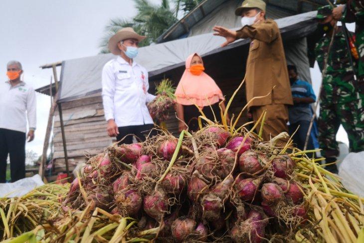 Pengembangan bawang merah Tapin terkendala pengelolaan bibit