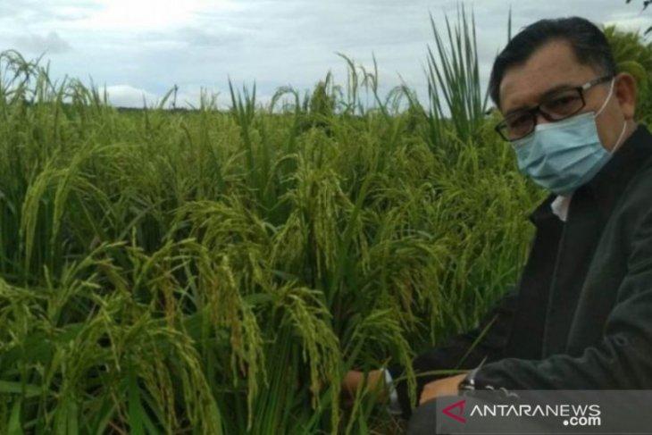 Distan Kalbar terus maksimalkan luas tanam padi untuk ketahanan pangan daerah
