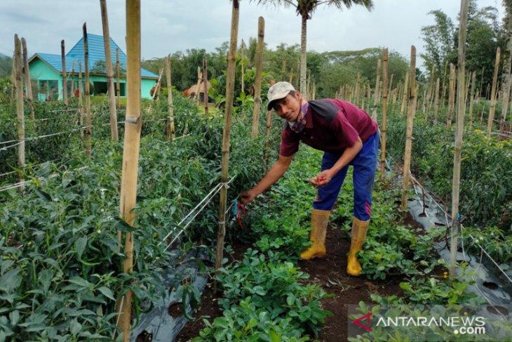 Dinas Pertanian Rejang Lebong dorong pemuda geluti dunia pertanian