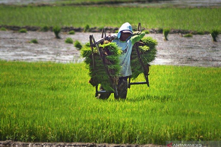 BPS: Nilai Tukar Petani naik 0,44 persen pada Mei 2021