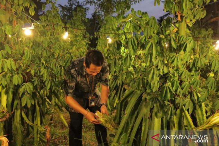 Petani Buleleng: Electrifying Agriculture PLN tingkatkan produktivitas