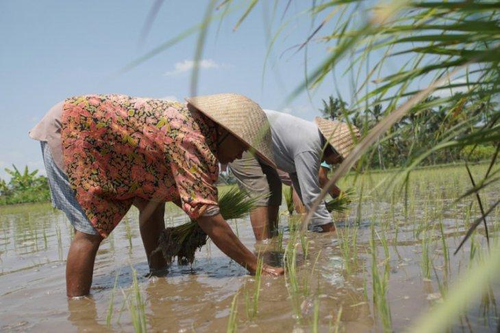 Membangkitkan gairah petani muda di Nusantara