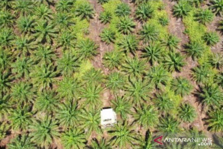 Bengkayang revisi IUP sawit untuk menjamin lahan pertanian masyarakat