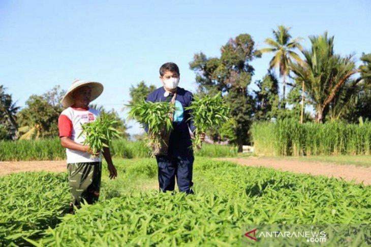 Bupati Bone Bolango promosikan Agrowisata Asmara Garden