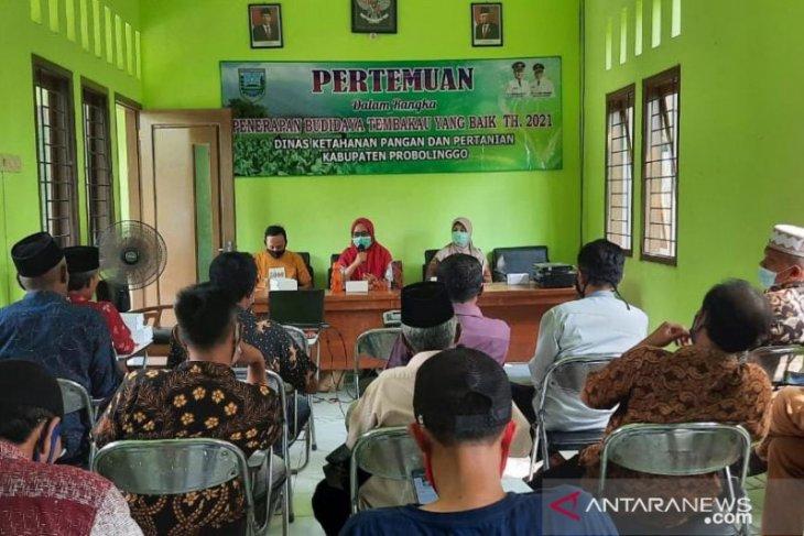 DKPP Probolinggo beri pelatihan petani tingkatkan mutu tembakau