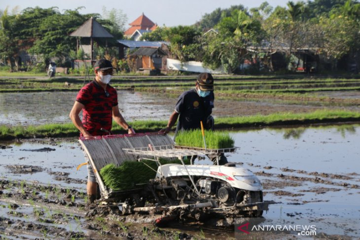Pandemi pacu Bali perkuat sektor pendidikan dan pertanian