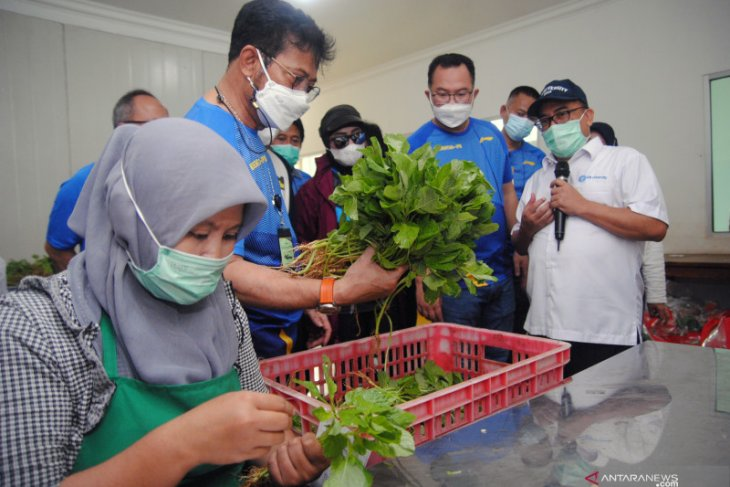 Menteri Pertanian: Realisasi produksi pangan naik