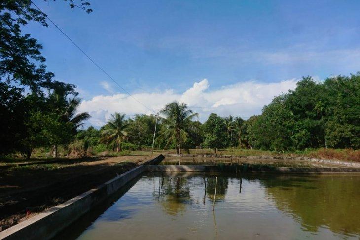 Begini cara Aceh Jaya meningkatkan kualitas benih ikan