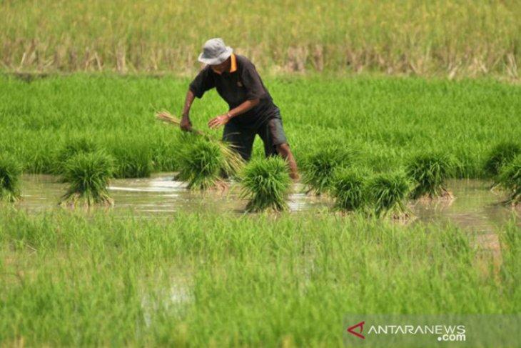 Wabup Aceh Utara usul lahan gambut untuk pengembangan pertanian