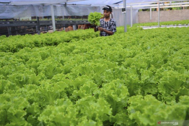 Kabupaten Bogor ingin cetak 150 petani milenial selama 2021