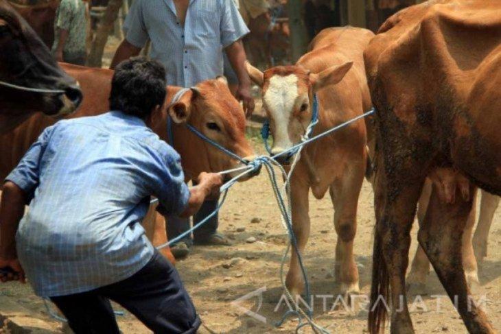 Kematian 26 sapi di Tulungagung karena virus anthrax